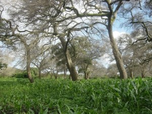 Agroforestry at 40: The institutional evolution of World Agroforestry in research, development, policy and delivery
