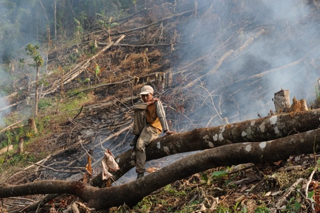 Fuzzy definitions hamper efforts to stop deforestation