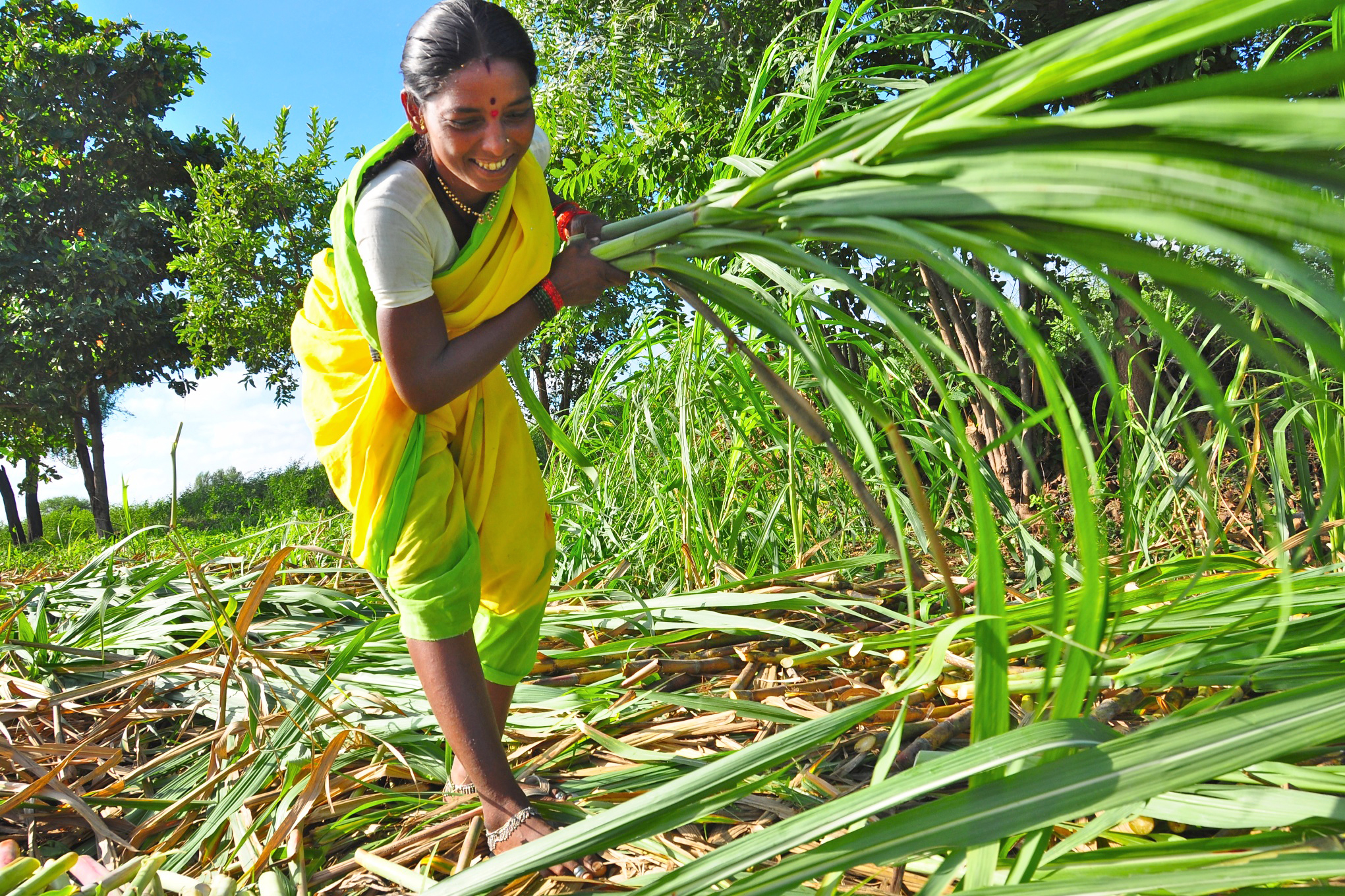 A woman gathers fodder from her agroforestry system. Image from www.swissaid.ch