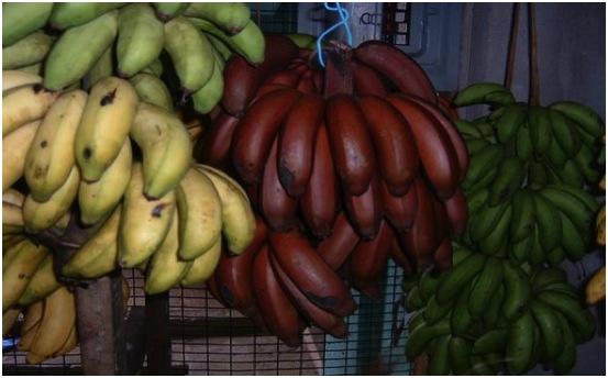 Banana-varieties. Image courtesy of J. Santilli