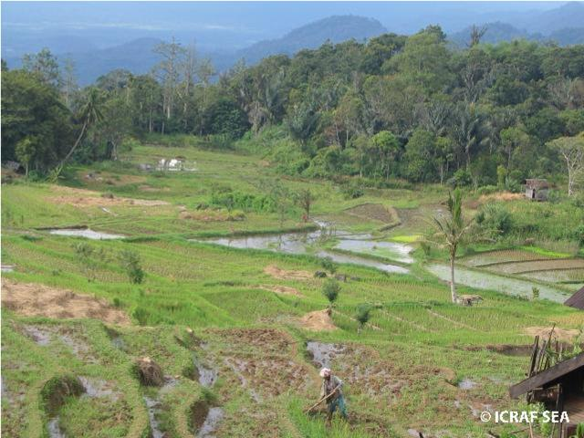 Integrated landscape with paddy and agroforests, Indonesia