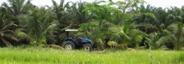 The carbon footprint of oil palm in Indonesia