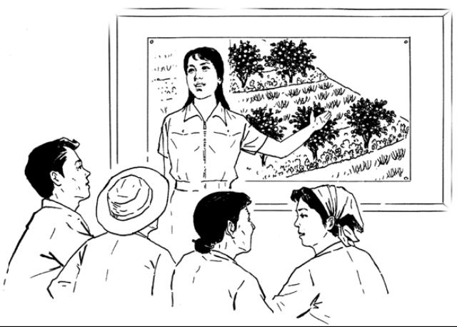 Illus Explaining agroforestry