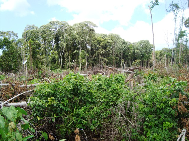 Deforestation, Tripa, peat, swamp, forest, Aceh