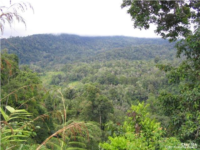 agroforest, Indonesia