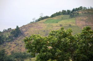watershed; sloping land; Indonesia; agroforest;