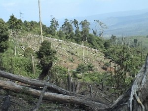 deforestation, sloping land
