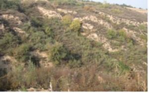 Early stage of restoration of vegetation on sloping land, China
