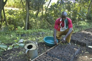 Water is an important consideration for tree nurseries. Photo: World Agroforestry Centre (ICRAF) archive