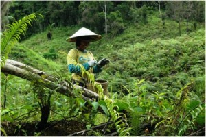 Farmer in forest in Kapuas Hulu, CIFOR, ESP conference