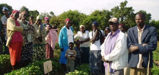 volunteer farmer training