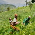 Women farmers. Photo credit: ICRAF