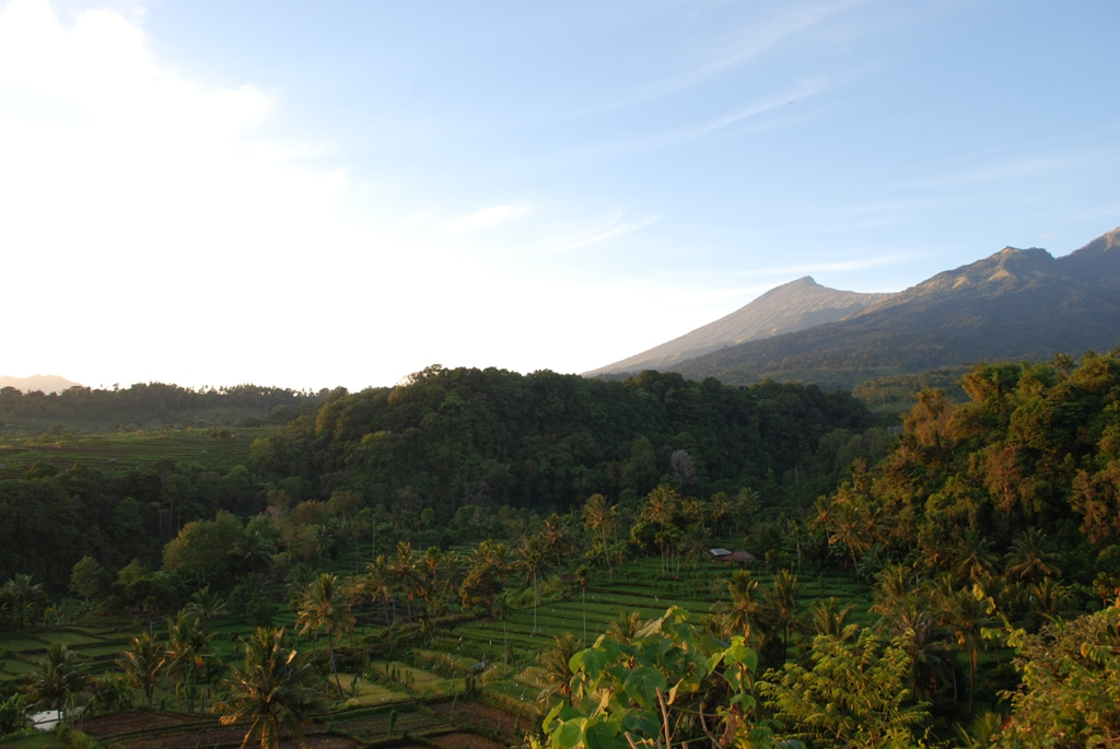 Plantation or private teak? Policy is key… - Agroforestry World