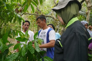 Coffee expert shares knowledge about pruning management during farmers' field school activity in Wonuahua, Southeast Sulawesi, Indonesia. Photo by Enggar Paramita/ICRAF via  Flikr