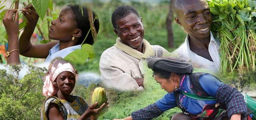 ICRAF photo montage via Flikr