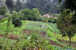 Farm in the Mt. Kenya region. Photo credit: Niel Palmer (CIAT)