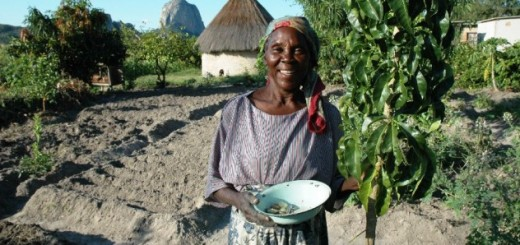 Africa, adaptation, climate change, smallholder