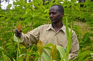 David Kenduywo at his farm in Kembu, Bomet County in Kenya. He grows fodder trees, shrubs and grass for his dairy cattle.