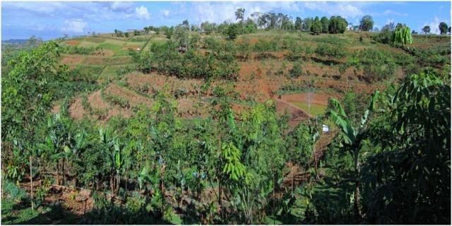 Conservation agriculture with trees