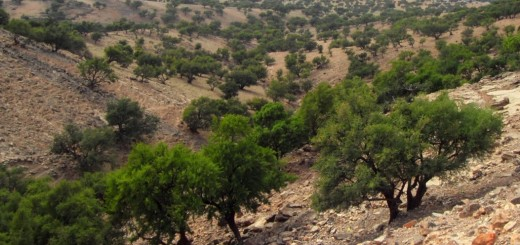 The argan ecosystem in Morocco