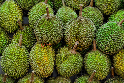 realising durian s potential in indonesia agroforestry world