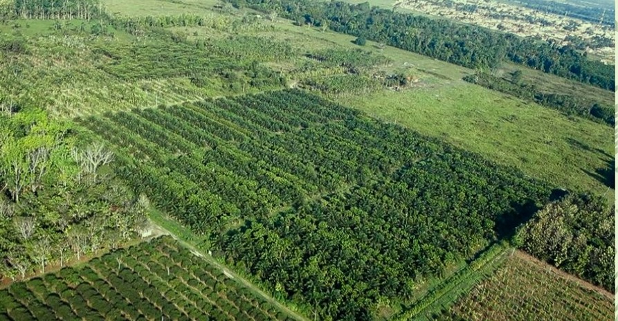 Producing Bioenergy With Agroforestry Could Be A Model For