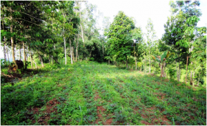 Agroforestry system in the Philippines, carbon sink, food security
