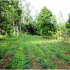 Agroforestry system in the Philippines