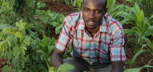 Vincent Rabach, a Research Assistant at the Centre, in a field where gliricidia sepium—a nitrogen fixing shrub—has been intercropped with maize.