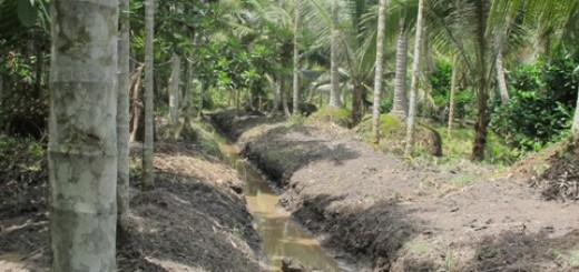 Drainage canals in smallholding AF system on peat in Tanjung Jabung Barat - Copy