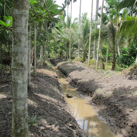 drainage canal, peat, agroforest, Tanjung Jabung Barat, Indonesia