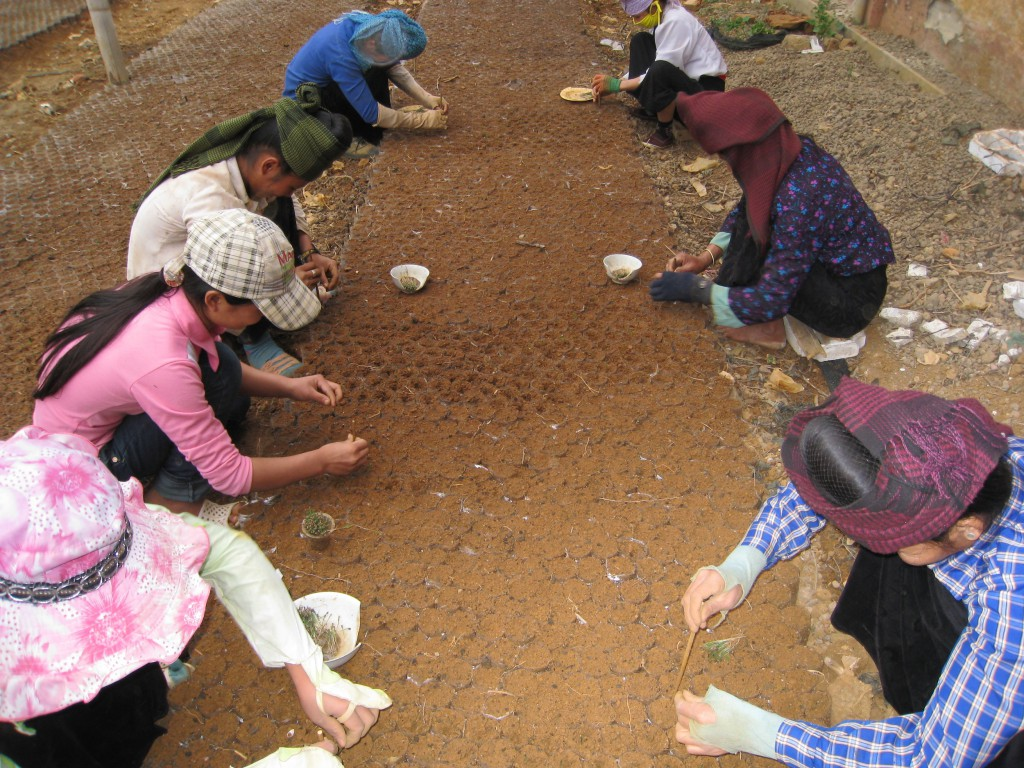 A group of farmers working for a smallholder nursery in Son La Province