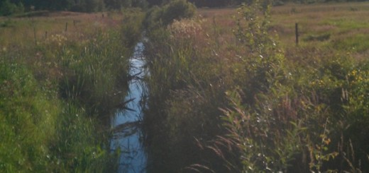 Drainage ditch, Sweden, agriculture