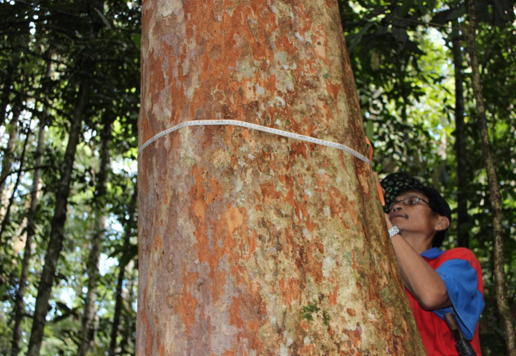 Forest monitoring in Indonesia-Photo by ICRAF-Southeast Asia