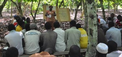 Farmers in Côte d'Ivoire learn about improved cocoa agricultural practices through the Vision for Change partnership project.