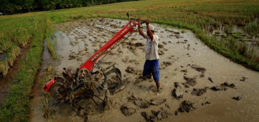 Farmer and plough, Sulawesi, Indonesia