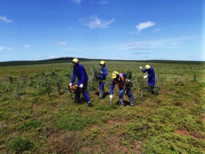 Planting Spekboom in medium degraded landscapes in South Africa