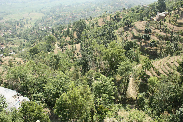 Tea agroforestry. Photo by Sailesh Ranjitkar/ICRAF, via Flikr https://www.flickr.com/photos/icraf/sets/72157648847066916