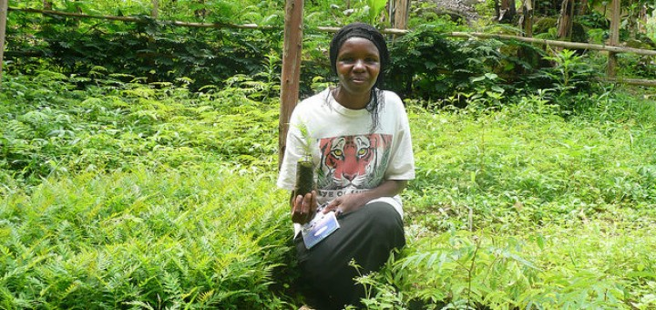 Member of a community-based nursery living adjacent to Mount Elgon National Park in southeast Uganda. Agroforestry is one practice that can promote multifunctional climate-smart landscapes. By Olivia E. Freeman/ICRAF