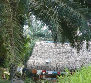 Oil Palm and house in Peru. Photo by  Jonathan Cornelius/ICRAF