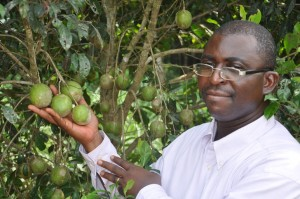 Dr Timothy Esekhade, of the Rubber Research Institute of Nigeria, with a fruiting bush mango tree. Photo by Julius Atia/ICRAF