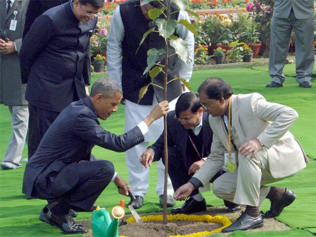 US President Obama-plants a Ficus sapling at Rajghat, India, 25 January 2015. US President Obama-plants a Ficus sapling at Rajghat, India, 25US President Obama-plants a Ficus sapling at Rajghat, India, 25 January 2015. Photo courtesy of the Press Information Bureau (PIB) of the Government of India