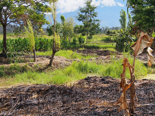 Underused land, Wamena
