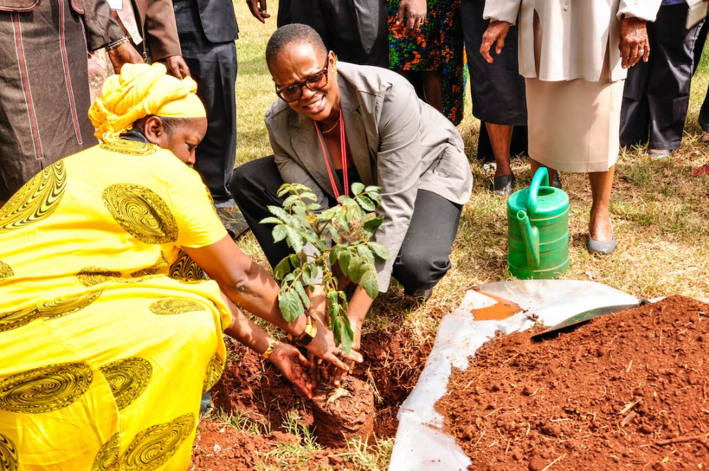 Aisha Karanja and Wanjira Mathai of the Green Belt Movement plant a tree at the ICRAF Campus, 4 March, 2015. Photo by D. Odhiambo/ICRAF