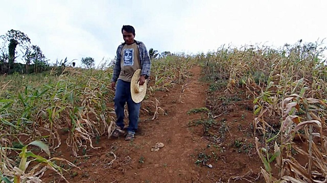 Crop failure, drought, Philippines