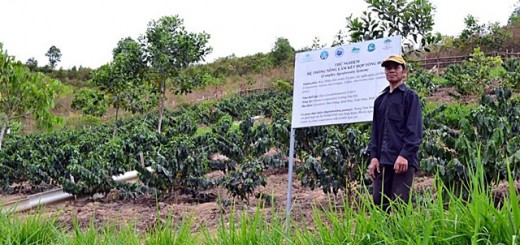 agroforestry trial, Northwest Viet Nam