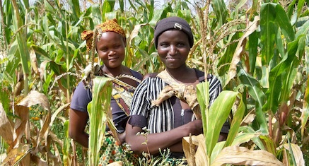 Women in a maize field. Photo: ICRAF