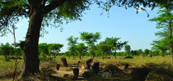 Parklands in Niger. By increasing farmers' incomes, agroforestry can help farmers adapt to climate change. Photo by ICRAF