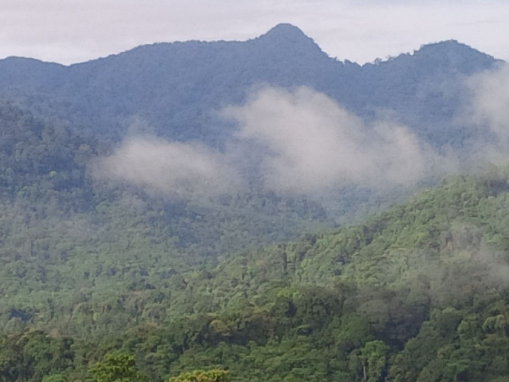 Forests have played important roles in human history. Photo: World Agroforestry Centre/Robert Finlayson