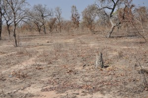 Impact of fires and ecosystem fragmentation in a community managed forest in Burkina Faso. Photo: Cheikh Mbow/ICRAF